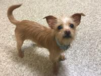 I am a 7 pound Terrier mix. I am very sweet and love to