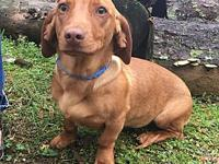 Ninja V in TN's story I am a Dachshund mix and the