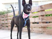 Nira, Spayed female, 1-year-old, 30-lbs  If you would