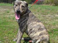 Nitro is a good-looking 1-2 year old Mixed Breed dog,