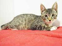 *NIXIE's story Outgoing kitten. We recommend you adopt