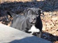 **We are located in NC but can transport puppies to