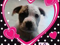 I have 3 NKC Reg. female American Bulldog puppies for