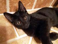 Noah's story Are you looking for a cuddly kitty? If so,
