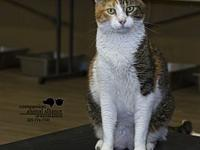 Noelle's story All cats in the adoption program are