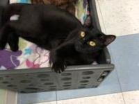 My story Meet Noir!Noir is one of our longest residents