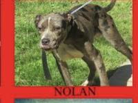 Nolan is so handsome.. the coloring of a Catahoula is