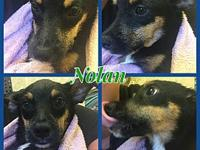 Nolan's story Talk about a laid back puppy!!! Meet