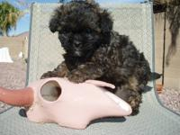 I have few puppies is 3 months old born 4/29/2015, very