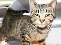 Noodle is a very sweet and friendly female tabby, she