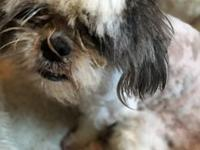 Norman's story Norman is a 3-4 year old Shih Tzu. He