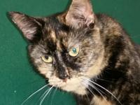 NOVA is an exquisite Tortie, very shy and careful. She