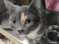 Nova's story I'm a silky smooth Tortie who is super