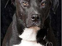 Nox's story Visit this organization's web site to see