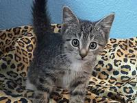 Nudge's story Nudge is the sweetest of sweets! This