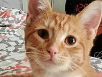 Nudgie's story Description: cute face, big eyes,