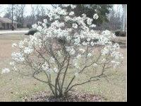 Description Large Selection Of Quality Trees & Shrubs
