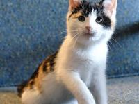 My story Nutmeg is a sweet calico kitty, about 8 weeks