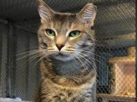 Nutty's story Calm, friendly, and somewhat dignified,
