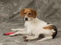 Nyla is a 2 yr old hound mix, female.  She is petite in