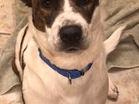 Nyla is a 1.5 year old mixed breed who was surrendered
