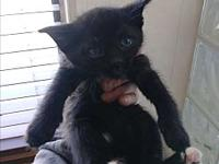 Nyte Tyme's story This kitten will not be leaving