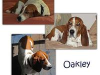 Oakley's story Oakley & Wagner are a bonded pair of