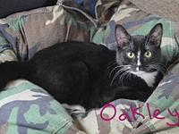 Oakley's story Oakley is a sweet and loving kitten who