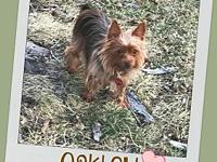 OAKLEY's story Great things come in small packages and