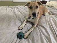 OBI's story My name is Obi and I am a rescue from the