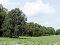 Property is a great potential homesite with room for