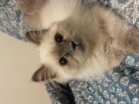 Very sweet and loving, litter box trained, kid
