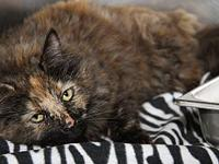 Octavia's story Octavia is a lovely 2-year old female
