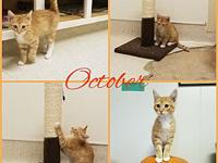 October's story October is a social kitten in need of a