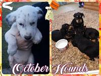 October Hounds's story THE OCTOBER HOUNDS: One of these