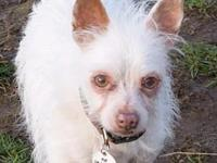 Odell's story * Male Terrier mix * Approximately 5
