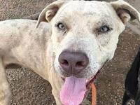 Oden's story Oden is a Catahoula mix, which gives him