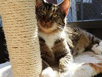 Oden's story Oden is a 1.5 year old male kitty looking