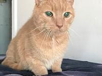 Odie's story Odie Age: 16 years old DSH/Neutered Male