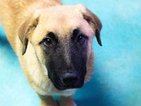 Odin's story Adoption fee is $150, this puppies approx.