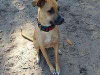 Odin's story I am sweet and shy boy looking for my