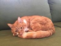Odin Kitty's story Odin- This older gentleman is a