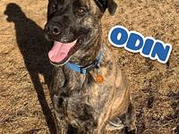 Odin's story Odin is a 3 year old Mastiff mix. His