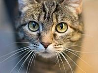 Offered by Owner - BEANE - Petite Senior Gal's story
