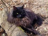 Offered by Owner - BLACKIE - Adult DLH's story