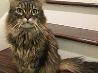 Offered by Owner - KALANI's story Kalani is the