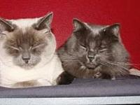Offered by Owner - Liono and Lilly - Senior pair's