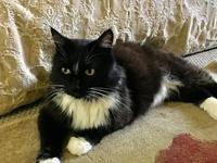 Offered by Owner - LOVERBOY - Young Manx's story Young