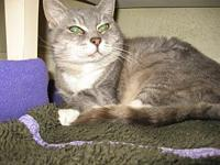 Offered by Owner - MISSY, Senior Sweetie's story