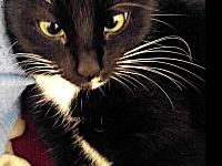 Offered by Owner MITTENS - Young Adult Female's story